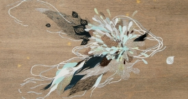 Collected Feathers