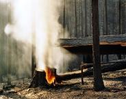Wildfire #22, Moonlight Fire, Plumas National Forest, CA
